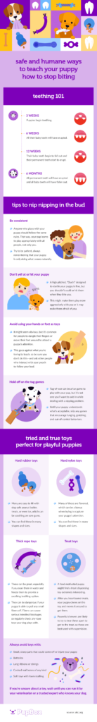 safe-and-humane-ways-to-teach-your-puppy-how-to-stop-biting-embed