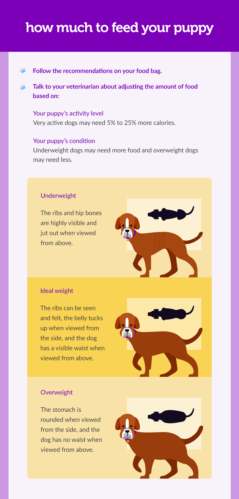 not-sure-how-much-you-should-feed-your-puppy-002