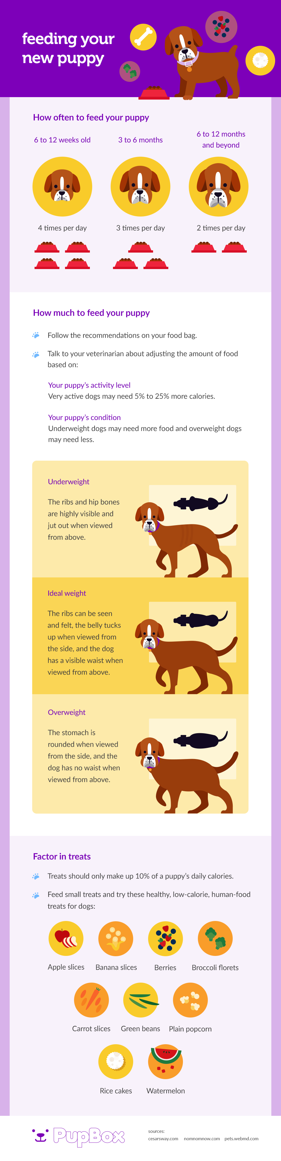Feeding your new puppy - Pupbox.com infographic