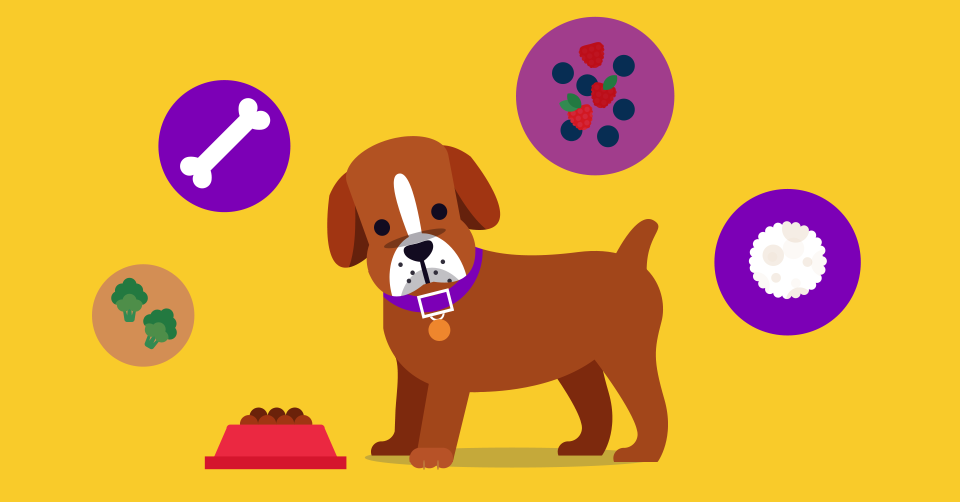 not-sure-how-much-you-should-feed-your-puppy-header