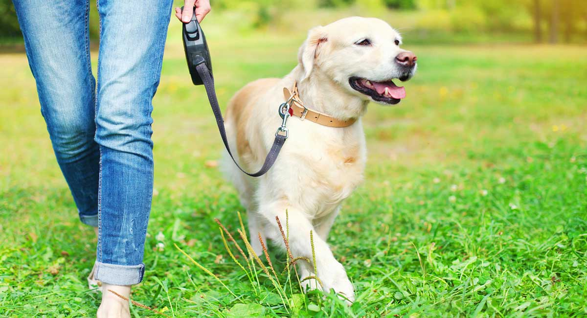 Introducing a Puppy to Walking on a Leash