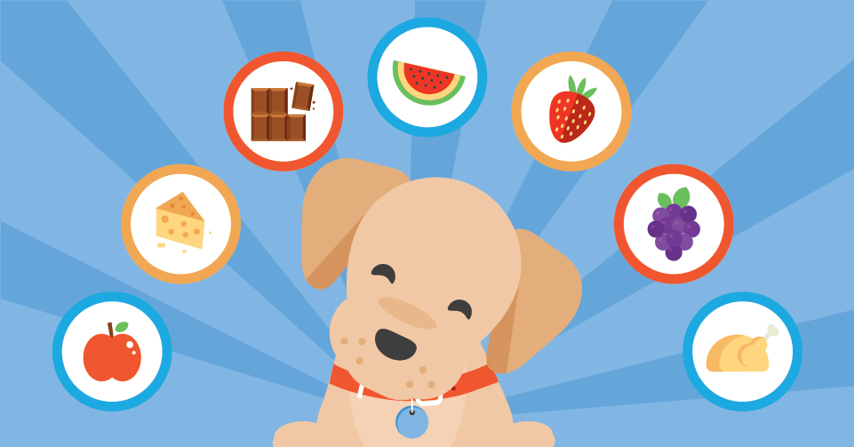 what-foods-are-safe-for-your-puppy-to-eat-header