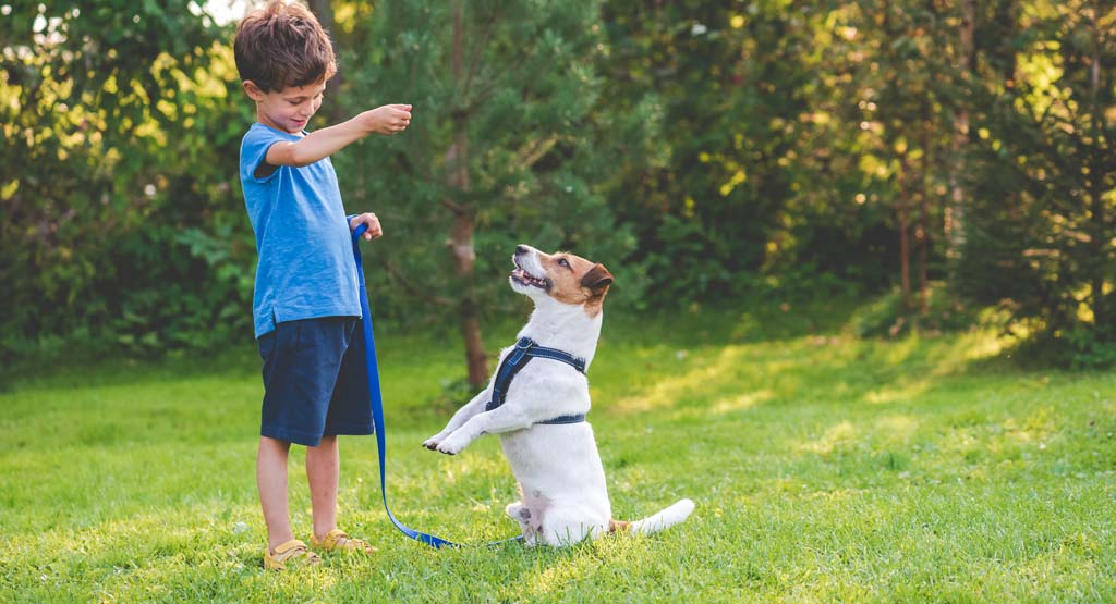 When to Start Teaching Puppy Commands