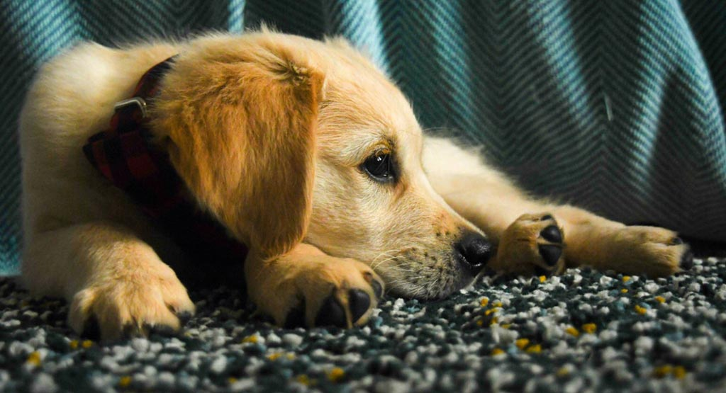 How to Trim Puppy Nails A Five-Step Guide