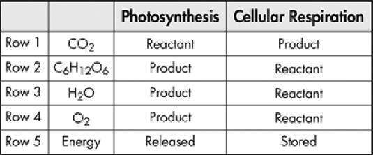 TEKS 4B-Cellular Respiration - Quiz Questions