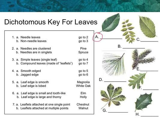 Dichotomous Keys Worksheet - Davezan