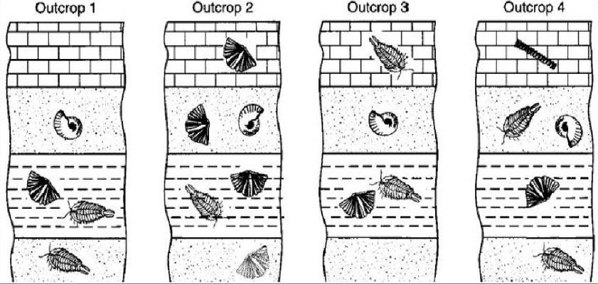 Quizizz Question Set - Inv. 7: Index Fossils