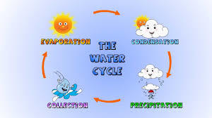 Water Cycle Test General Science Quiz Quizizz