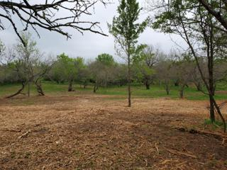 Recent Clearing of Underbrush