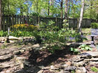Flowering back yard