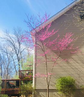 Spring time joy