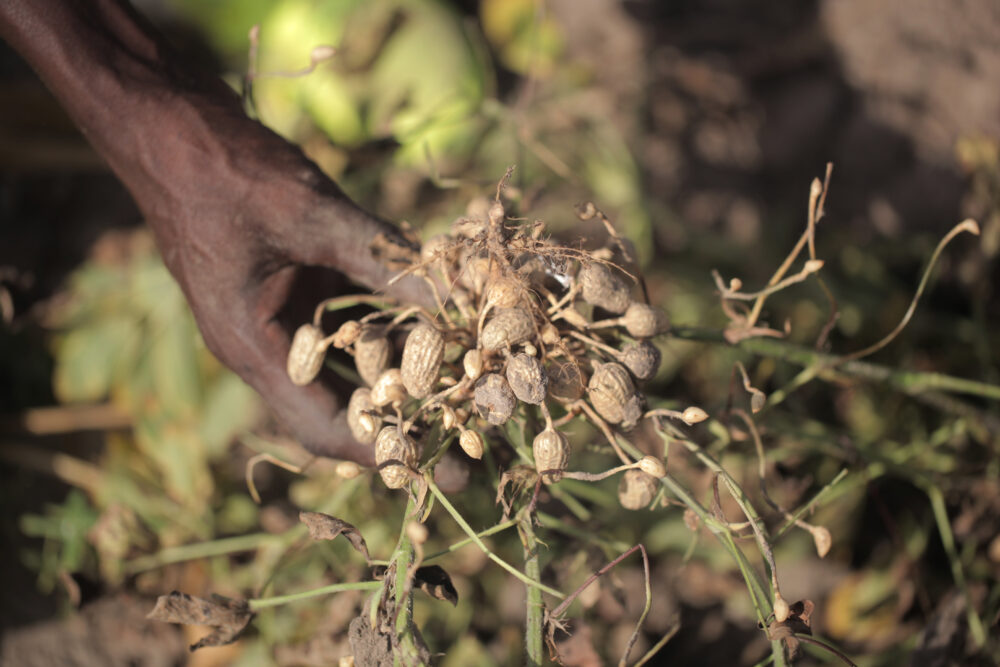 African {Crop Types}