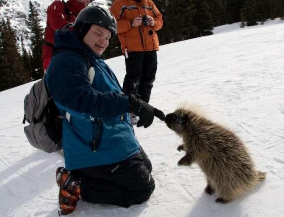 Justin-porcupine