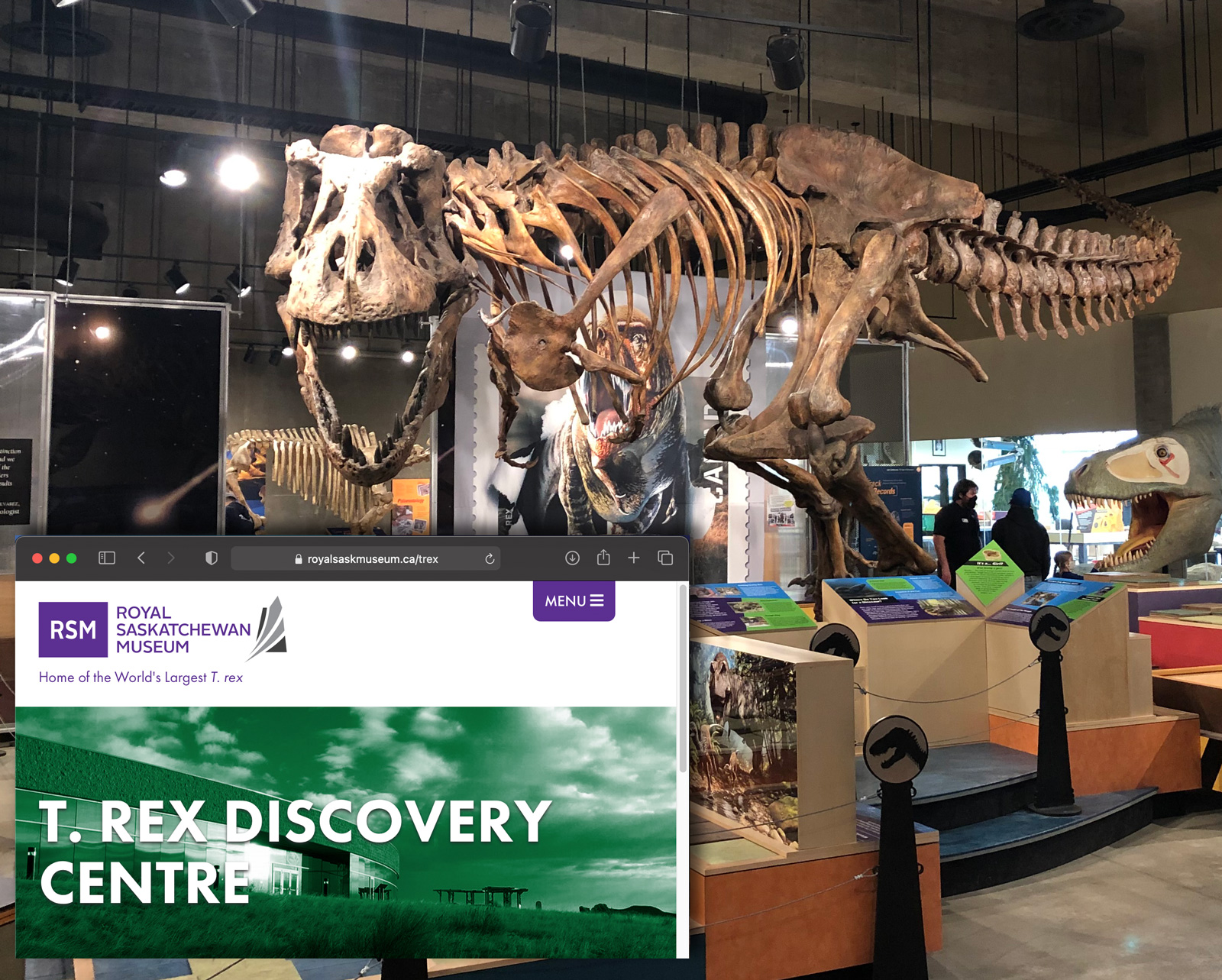 Scotty at the T. rex discovery centre