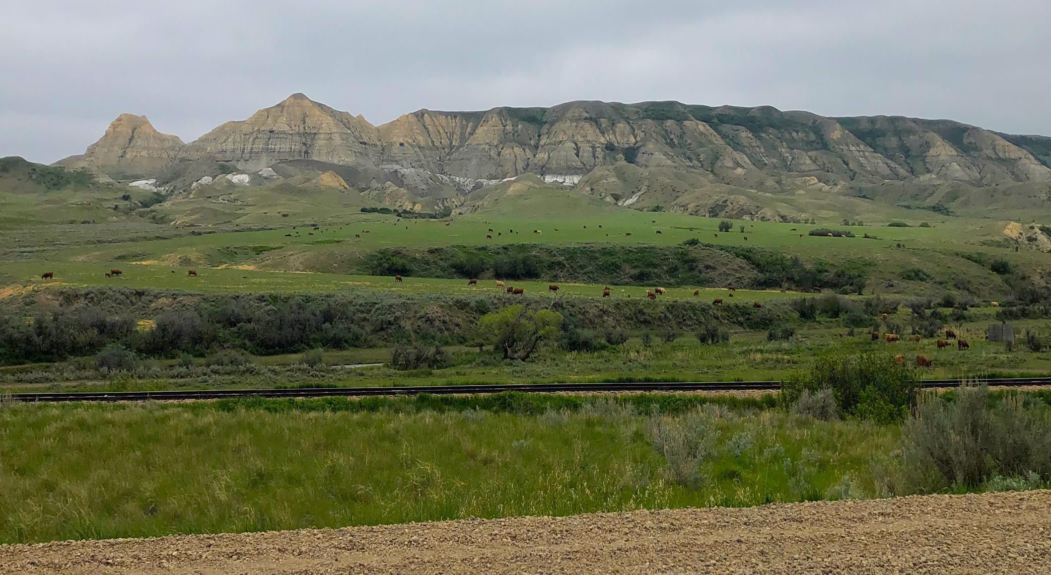 Outcrops of the Whitemud formation in the Eastend river valley - 2021