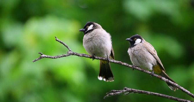 Header Image of Birds