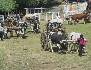 La Fiesta del Carrero tiene una gran tradición en la cordillera.
