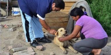 Salud. En el operativo se controlan animales domésticos y ganado mayor. También se realiza un censo.
