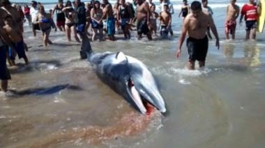El animal apareció en la orilla y provocó conmoción en los turistas que estaban allí. (foto: 0223).