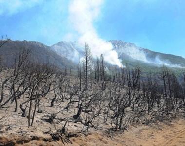 El fuego le dio algunos días de tregua a la devastada superficie boscosa de la paradisíaca Cordillera.
