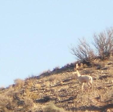 La imagen muestra al animal descripto como un ciervo blanco.