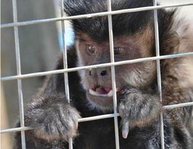 "Rescate. En abril se liberó al mono ""Felipe"", que fue enviado a Córdoba."