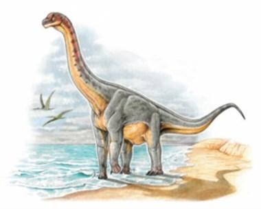Restos. Los fósiles permitieron la reconstrucción del Padillasaurus.