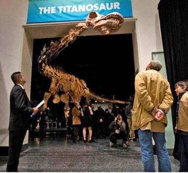 Por su tamaño, el cuello y la cabeza del Titanosaurio quedaron por fuera de la sala de exhibición.