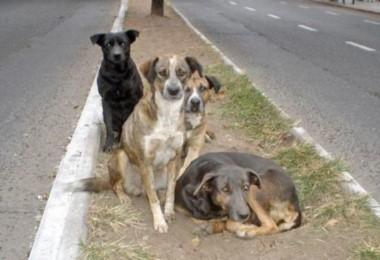 Un estudio concluyó que en las calles de Río Cuarto se encontraban 5.558 perros. (Archivo).