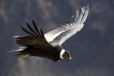 El plomo elevado interfiere con el comportamiento y el éxito reproductivo de las aves y puede ser mortal a causa de las alteraciones digestivas.