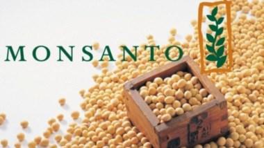 Monsanto está en el ojo de la polémica por su agroquímico estrella, masivamente utilizado en el cultivo de soja transgénica.