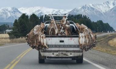 Poca zafra. Dicen que faltan animales porque se los llevan vivos.