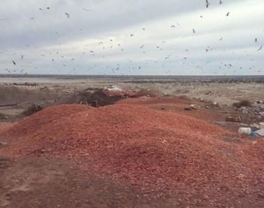 Gaviotas. Así de sucia quedó la vera de la ruta gracias a una mala costumbre que el municipio no controla.