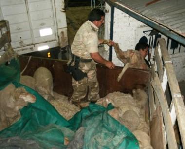 Robos. El delito con el ganado preocupa cada vez más en Chubut.
