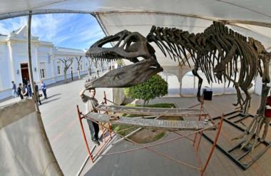 Operarios del Gobierno provincial instalando la inmensa réplica del dinosaurio que se exhibe desde hoy.