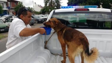 Las dos personas mayores de edad fueron denunciadas por vecinos de la zona de Avellaneda porque estaban obligando al can a correr con velocidad.