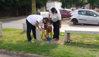 Dos personas fueron detenidas en Rosario por hacer correr a un perro atado a una camioneta.