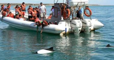 El avistaje del Delfín Patagónico es uno de los principales atractivos de la zona junto con Playa Unión.