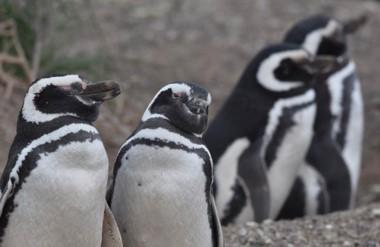 Punta Tombo, con los pingüinos, fue uno de los destinos más elegidos por los turistas.