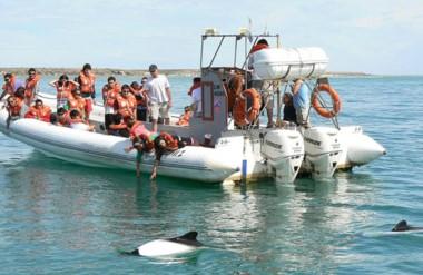 Según el informe de relevamiento  fueron muchos los visitantes que realizaron el avistaje de toninas.