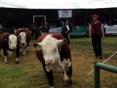 Sarmiento convocó a productores de toda la Patagonia (foto Barrie Dickanson)