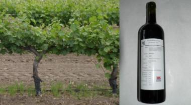 En el INTA ya producen vinos experimentales