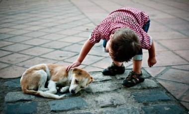 En Alta Gracia, una serie de beneficios a los ciudadanos del pueblo permitió que se adoptara de forma exitosa perritos callejeros.