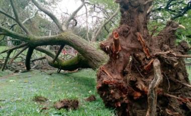 Tragedia en un camping de Unquillo: se cayó un árbol y mató a un niño de 11 años.