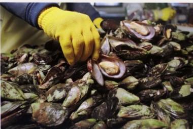 La decisión fue adoptada en virtud de los últimos análisis realizados en el marco del Plan Provincial de Prevención y Control de Marea Roja.