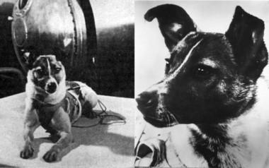 Un informe científico ruso conocido en 2002 concluyó que Laika murió sofocada por el calor al fallar el sistema de refrigeración.