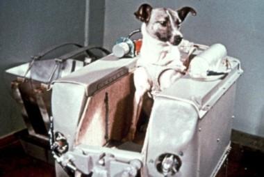 Laika, quien se convirtió en una celebridad, sólo llegó a vivir entre cinco y siete horas ya que, por un error de cálculo, la temperatura en el interior de la cápsula, subió hasta más de 40 grados.