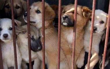 """""""Esta actividad está condenada. Quise parar antes de que fuera demasiado tarde"""", suspira Kim, de 56 años dueño de un criadero de perros."""