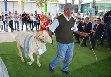 Premiación y exhibición. La Estancia La Angelita se quedó con el premio del Gran Campeón con un animal de 139 kilos de peso.