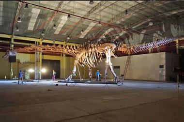 Trelew y el MEF tuvieron proyectos identificatorios pero con el titanosaurio  se encontró un sello distintivo.